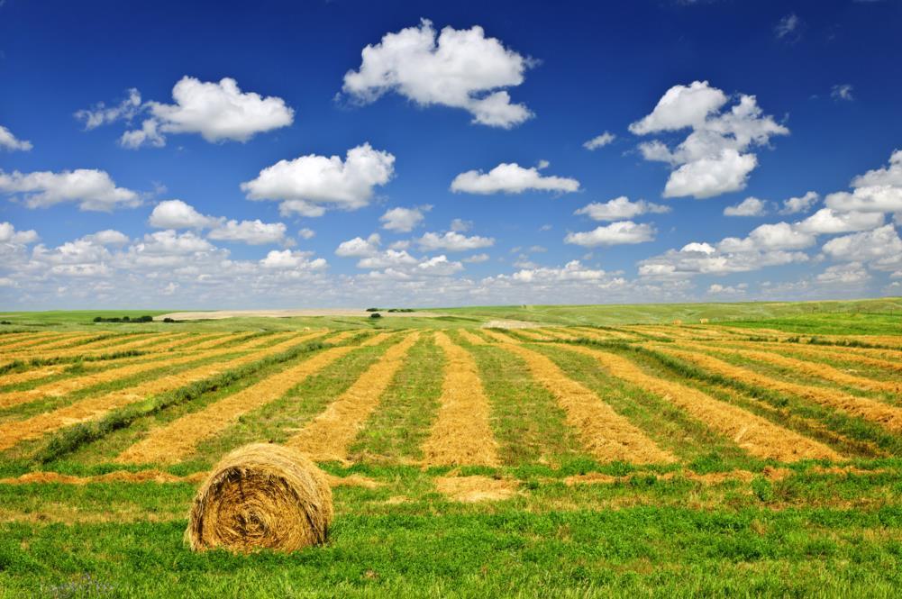 Terreno Agricolo in Vendita a Sarzana