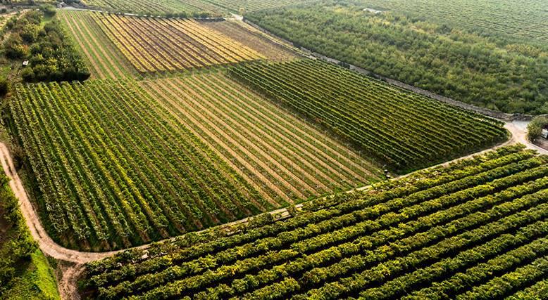 Terreno Agricolo in vendita a Ortonovo, 9999 locali, zona Zona: Luni Scavi, Trattative riservate | Cambio Casa.it