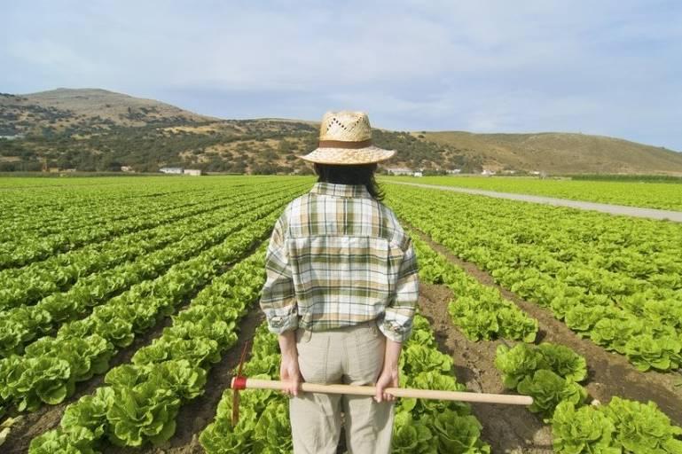Terreno Agricolo in Vendita a Ortonovo