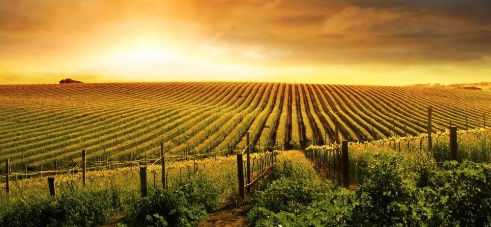 Terreno Agricolo in vendita a Ortonovo, 9999 locali, zona Zona: Nicola, Trattative riservate | Cambio Casa.it