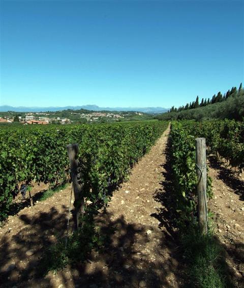Azienda Agricola in vendita a Verona, 9999 locali, Trattative riservate | Cambio Casa.it