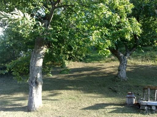 Terreno Agricolo in Vendita a Vicchio