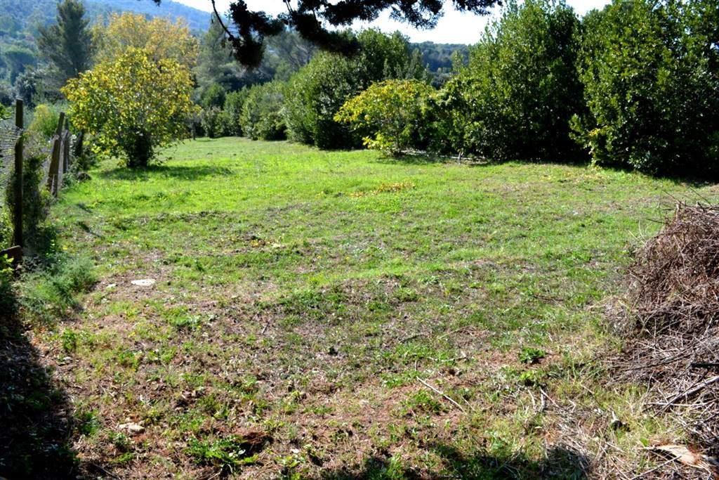 Terreno agricolo VILLA CORRIDI - Foto 16
