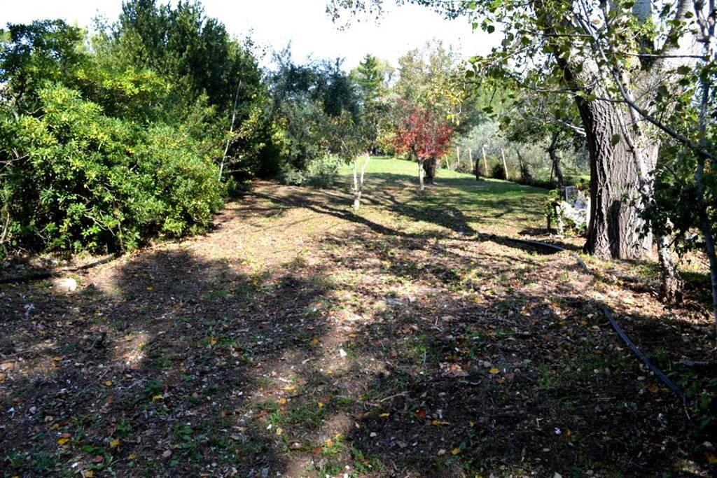 Terreno agricolo VILLA CORRIDI - Foto 11
