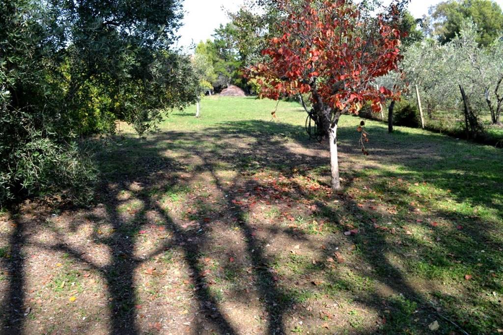 Terreno agricolo VILLA CORRIDI - Foto 13