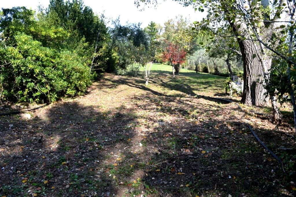 Terreno agricolo VILLA CORRIDI - Foto 12