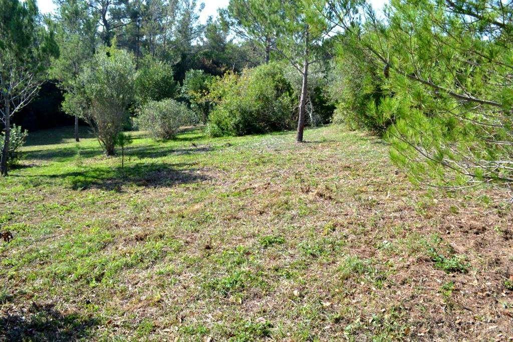 Terreno agricolo VILLA CORRIDI - Foto 6