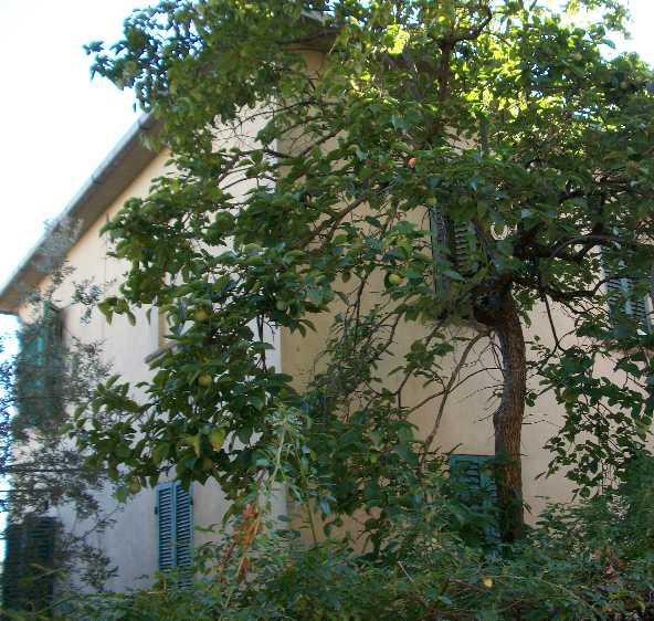 Villa, Monte San Savino, da ristrutturare