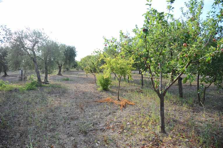 Terreno Agricolo in vendita a San Severo, 9999 locali, prezzo € 60.000 | Cambio Casa.it