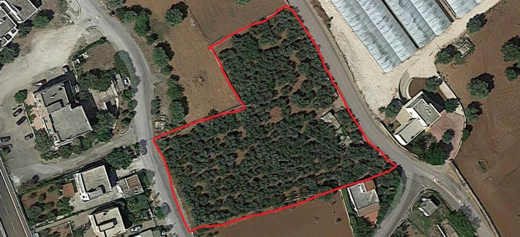Terreno Agricolo in vendita a Monopoli, 9999 locali, zona Località: LASSUNTA, prezzo € 48.000 | CambioCasa.it