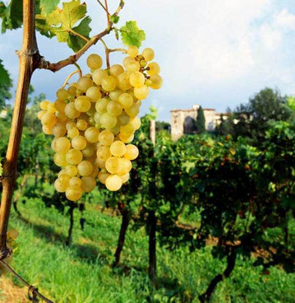 Terreno Agricolo in vendita a Mosciano Sant'Angelo, 9999 locali, prezzo € 75.000 | Cambio Casa.it