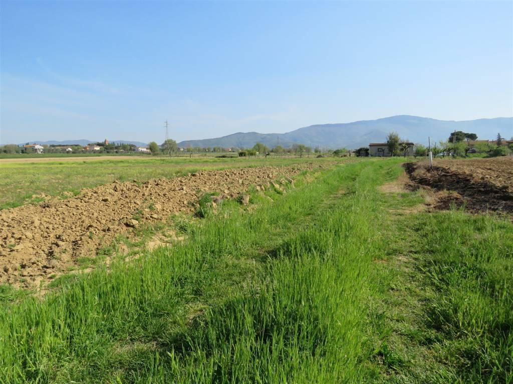 Terreno Agricolo in Vendita a Cortona