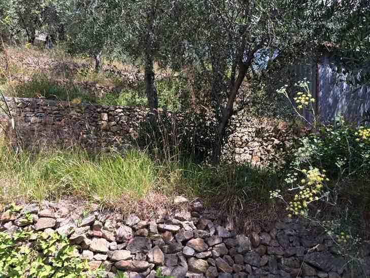 Terreno Agricolo in vendita a Noli, 9999 locali, prezzo € 35.000 | Cambio Casa.it