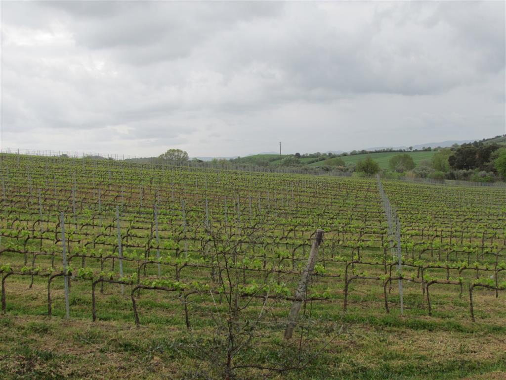 Azienda Agricola in vendita a Magliano in Toscana, 1 locali, zona Zona: Montiano, prezzo € 2.500.000 | CambioCasa.it