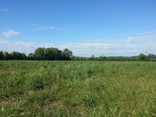Terreno Agricolo in Vendita a Paese