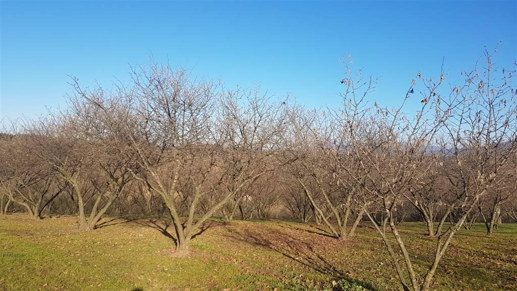 Terreno Agricolo in vendita a Palestrina, 9999 locali, zona Zona: Carchitti, prezzo € 70.000 | Cambio Casa.it