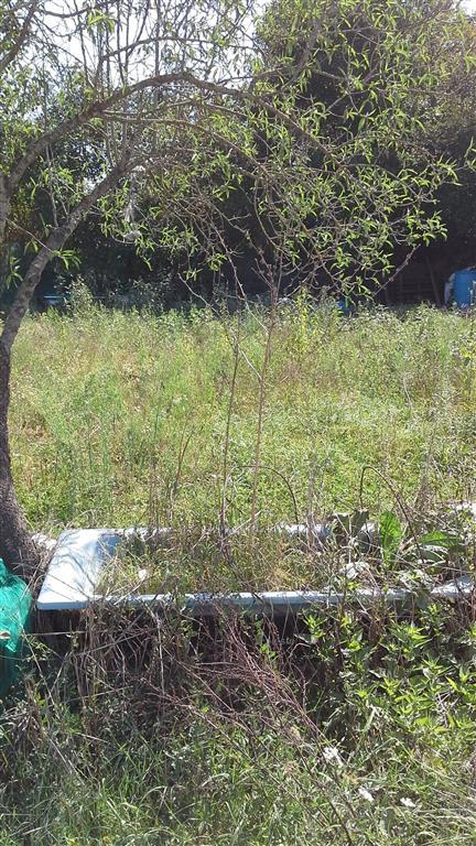 RINALDI, SCANDICCI, Terreno agricolo in vendita di 7000 Mq, Classe energetica: G, posto al piano Terra, composto da: , Prezzo: € 105.000
