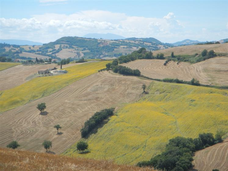 Azienda Agricola in vendita a Arcevia, 9999 locali, prezzo € 1.490.000 | Cambio Casa.it