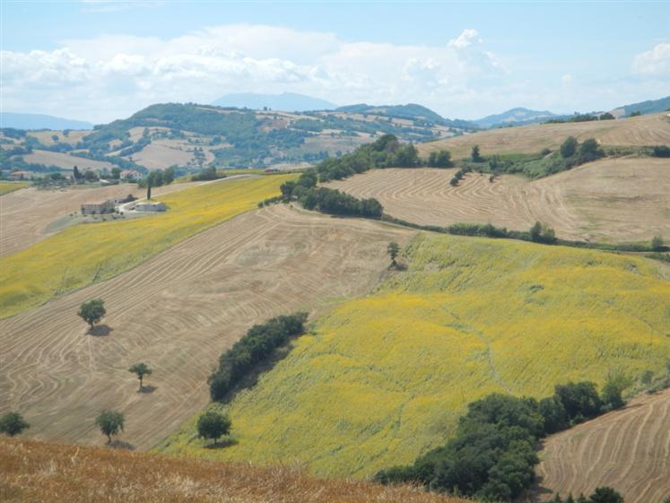 agriturismo-azienda agricola in Vendita Arcevia in provincia di Ancona