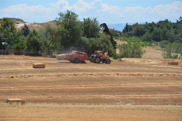 Terreno Agricolo in vendita a Staffolo, 9999 locali, zona Zona: Coste, Trattative riservate | Cambio Casa.it