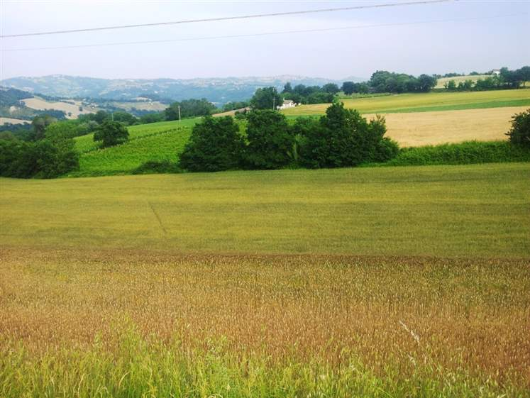 Case mergo compro casa mergo in vendita e affitto su - Diritto di passaggio su terreno agricolo ...
