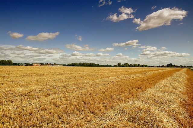 Terreno Agricolo in vendita a Monsano, 9999 locali, prezzo € 90.000 | Cambio Casa.it