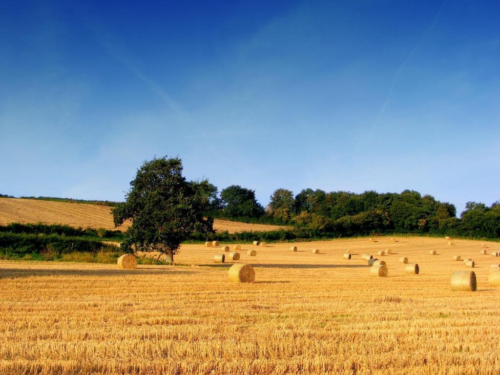 Terreno Agricolo in Vendita a Jesi