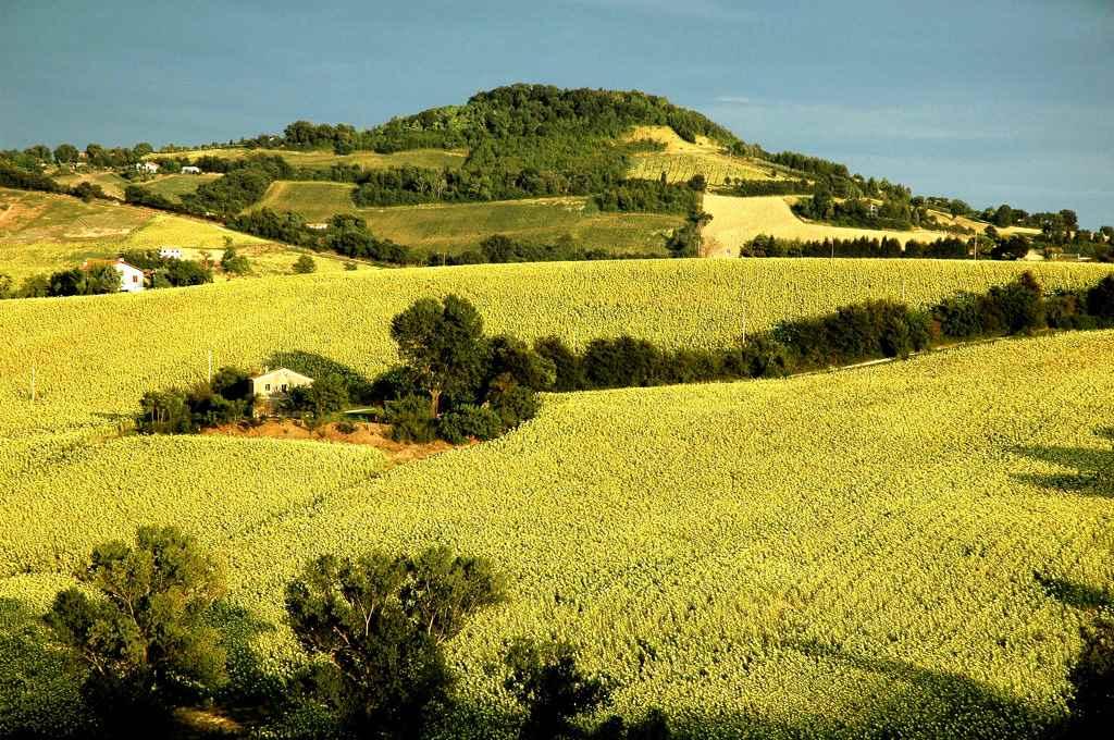 Terreno Agricolo in vendita a Ancona, 9999 locali, zona Zona: Taglio di Barcaglione, Trattative riservate | Cambio Casa.it