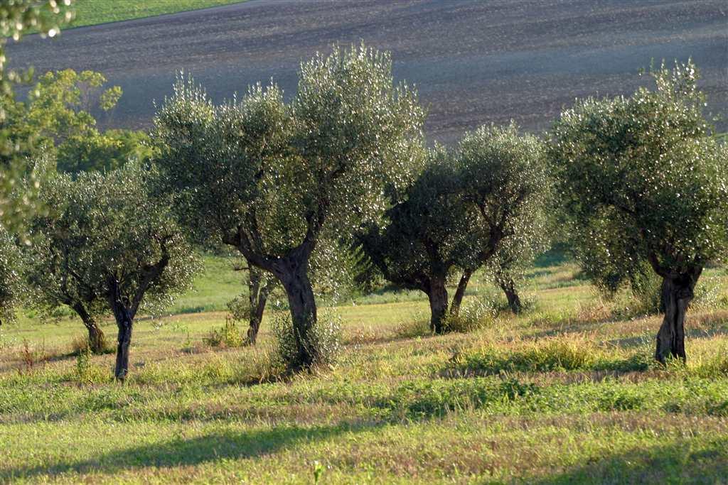 agriturismo-azienda agricola Vendita Castelbellino