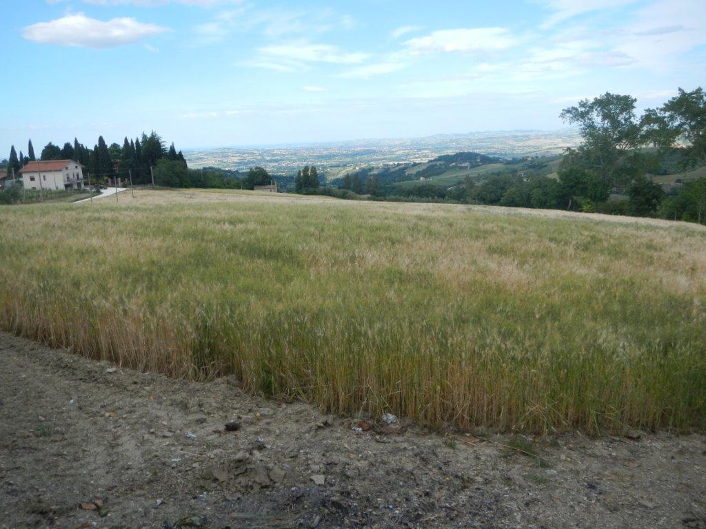 Terreno agricolo in vendita a cupramontana ancona rif - Casa abusiva su terreno agricolo ...