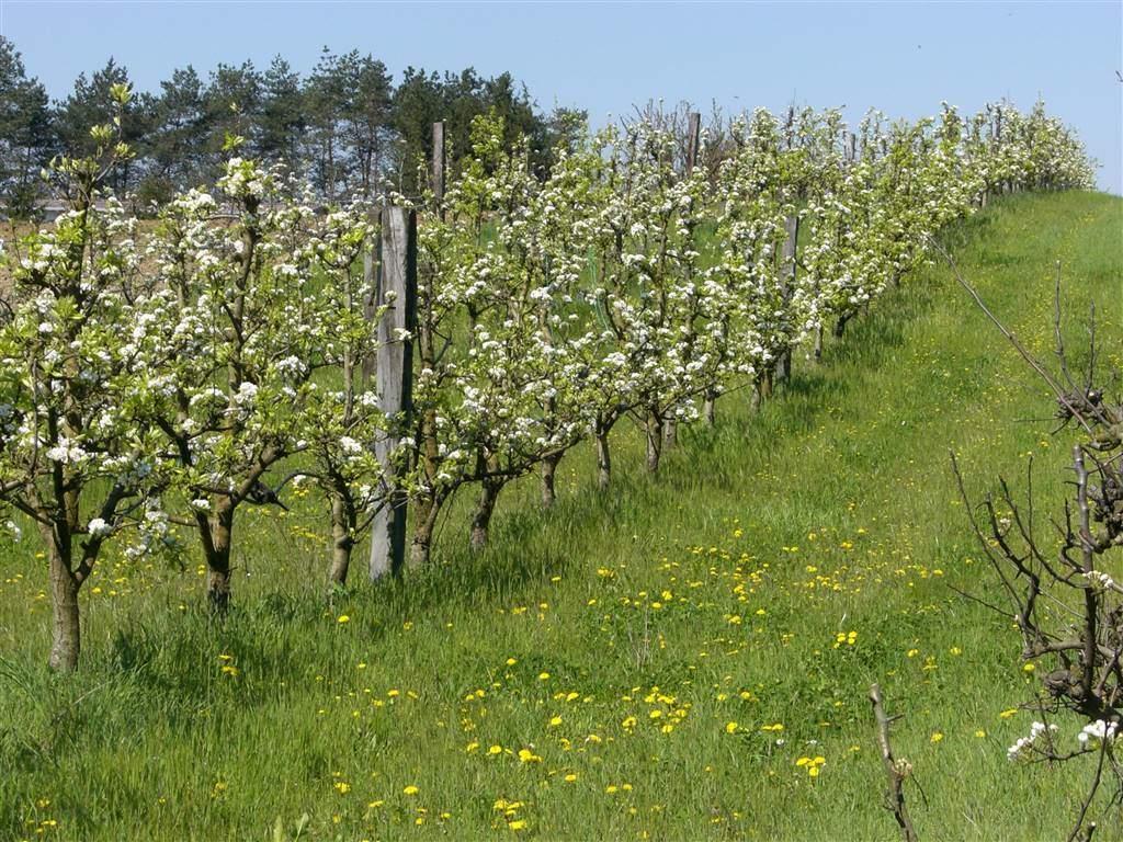 Terreno Agricolo in vendita a Castelbellino, 9999 locali, zona Zona: Pianello Vallesina, prezzo € 90.000 | Cambio Casa.it