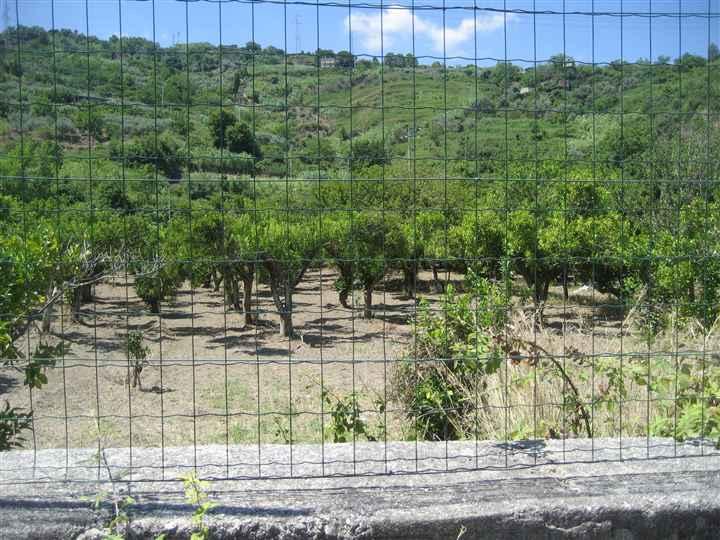 Terreno Agricolo in vendita a San Pier Niceto, 9999 locali, Trattative riservate | CambioCasa.it
