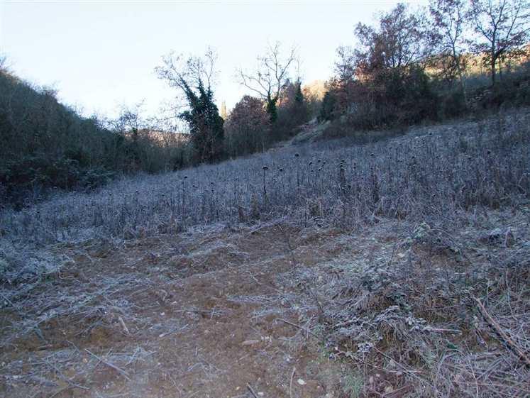 Terreno Agricolo in vendita a Rignano sull'Arno, 9999 locali, zona Zona: Castellonchio, prezzo € 40.000 | CambioCasa.it