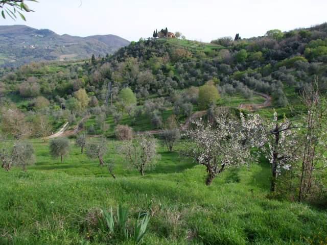 Terreno Agricolo in Vendita a Rufina