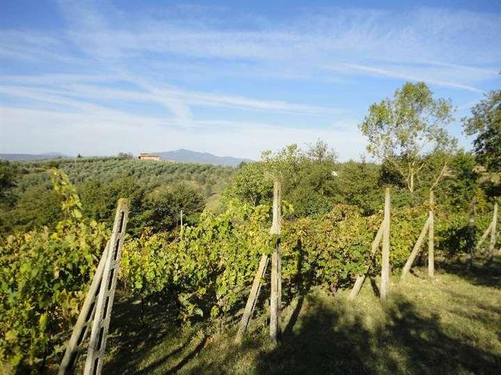 Terreno Agricolo in vendita a Monteleone d'Orvieto, 9999 locali, zona Zona: Santa Maria, prezzo € 40.000 | Cambio Casa.it