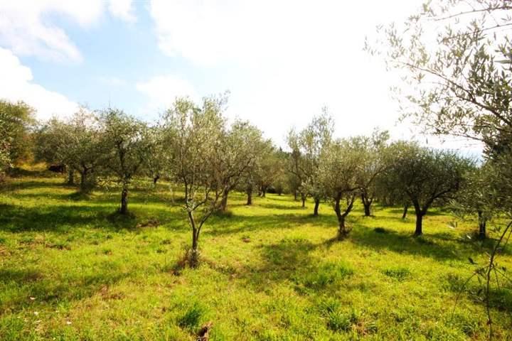 Terreno Agricolo in vendita a Firenze, 9999 locali, zona Zona: 14 . Sorgane, La Rondinella, Bellariva, Gavinana, prezzo € 48.000 | Cambiocasa.it