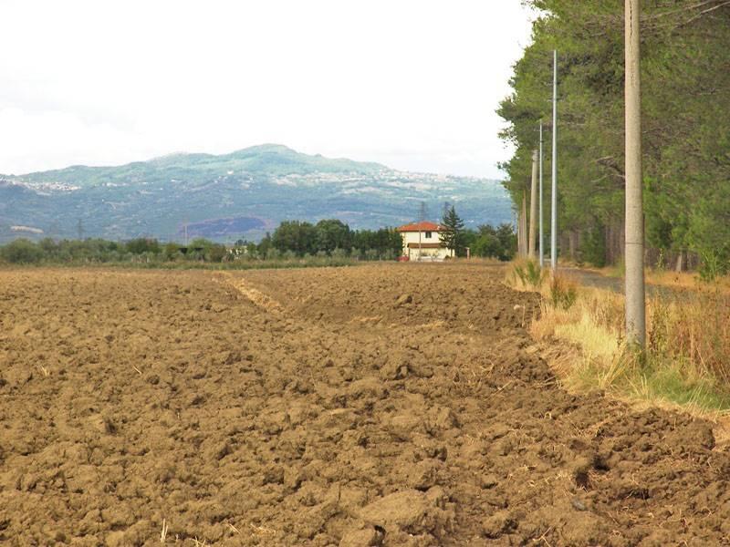 agriturismo-azienda agricola Vendita Grosseto