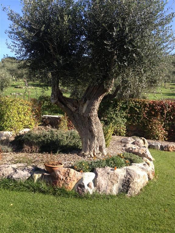 Villa Bifamiliare in vendita a Grosseto, 7 locali, zona Zona: Roselle, prezzo € 530.000 | CambioCasa.it