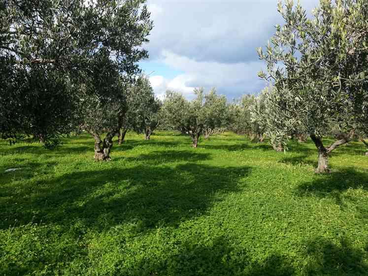 Terreno Agricolo in vendita a Balestrate, 9999 locali, prezzo € 90.000 | Cambio Casa.it