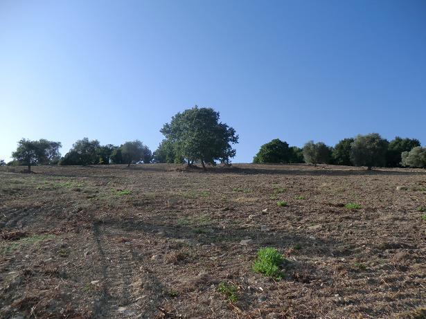 Terreno Agricolo in vendita a Suvereto, 9999 locali, prezzo € 295.000 | CambioCasa.it