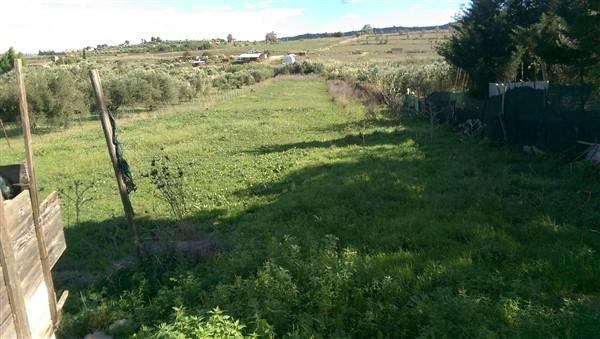Terreno Agricolo in Vendita a Carlentini