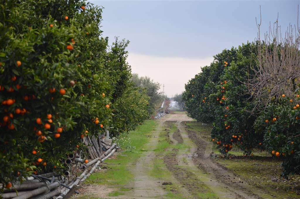 agriturismo-azienda agricola in Vendita Policoro in provincia di Matera