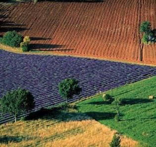 Terreno Agricolo in vendita a Montieri, 9999 locali, zona Zona: Gerfalco, prezzo € 13.000 | Cambio Casa.it