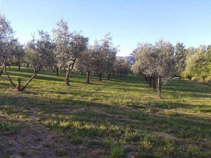 terreno  in Vendita a Capannori