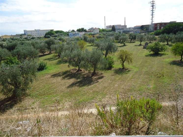 Terreno Agricolo in Vendita a Bari