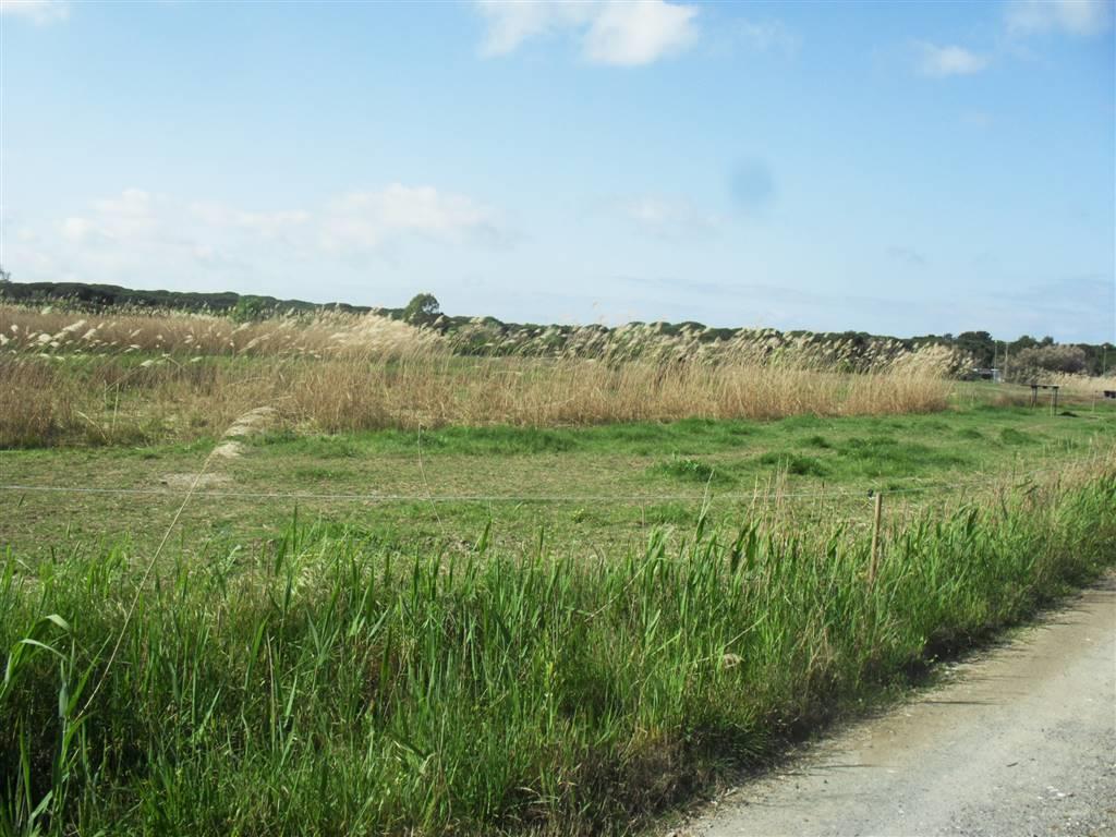 Terreno Edificabile Residenziale in vendita a Cecina, 9999 locali, prezzo € 130.000 | CambioCasa.it