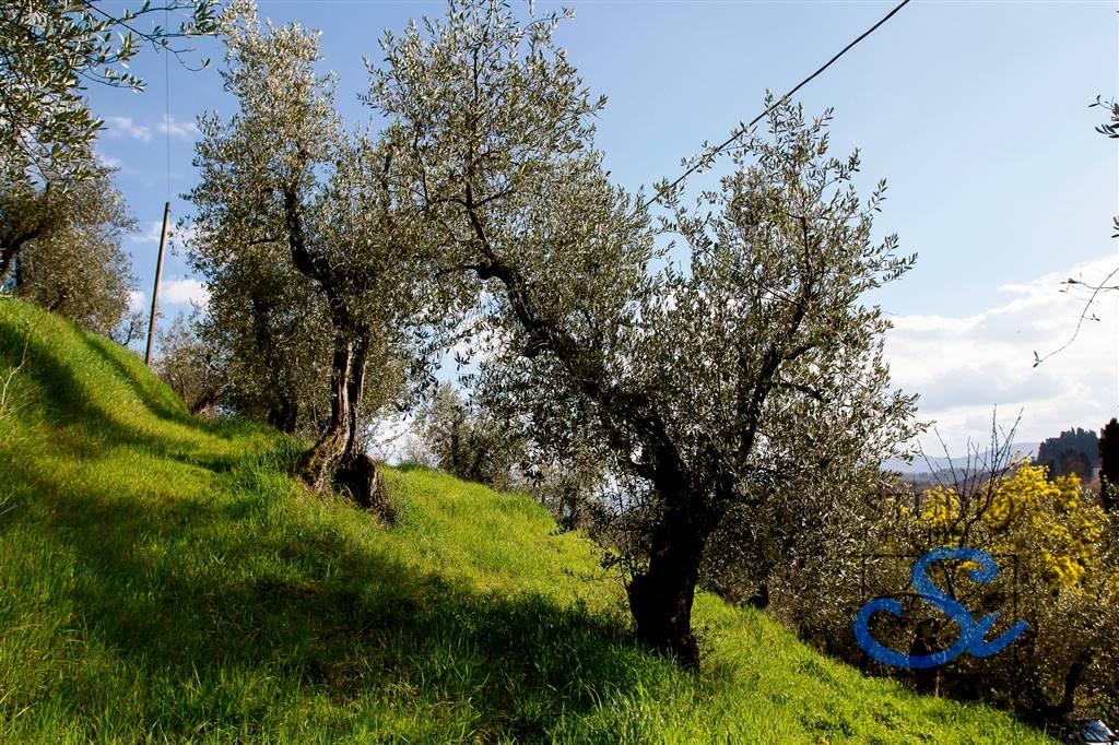 Colonica - Torbecchia