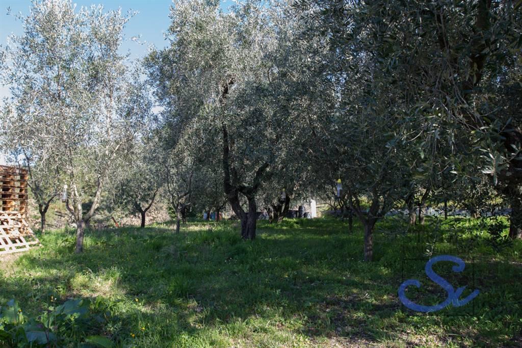 Colonica - Castellina