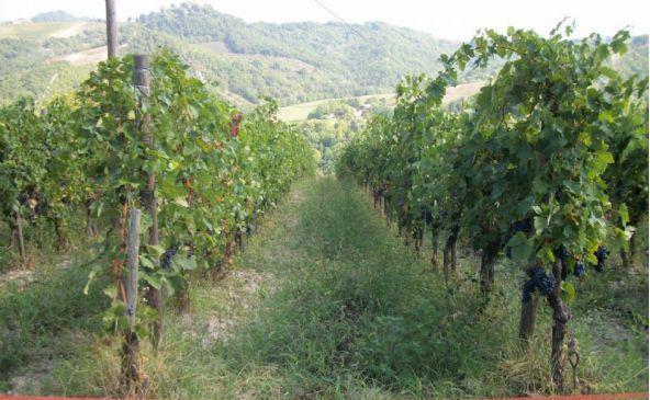 Azienda Agricola in vendita a Fortunago, 5 locali, zona Zona: Gravanago, prezzo € 370.000 | CambioCasa.it