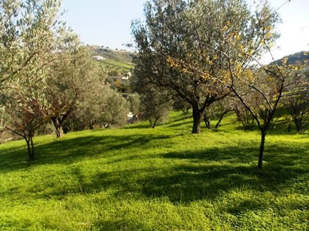 Terreno Agricolo in vendita a Borgia, 9999 locali, zona Zona: Vallo, prezzo € 25.000 | CambioCasa.it